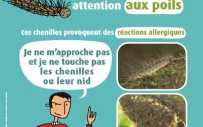 Chenilles urticantes en Île-de-France : Conseils sanitaires